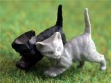 Set van 3 kittens kleine katjes